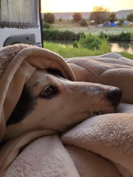 הכלב שלי מתעורר איתנו בקמפינג