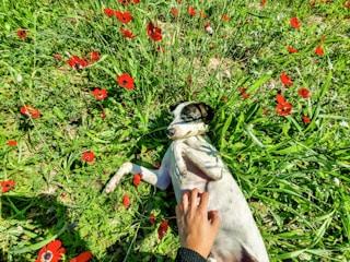 מטיילת עם ג'וי ג'וי הכלב שלי
