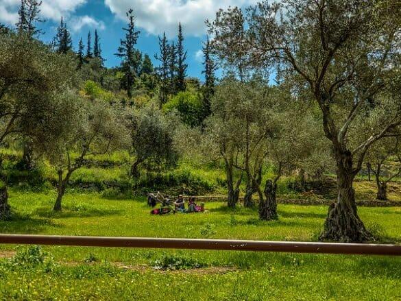 מקום מקסים לפיקניק בהרי ירושלים